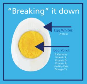 EggInfo