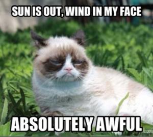 3-11-grumpy-cat-in-sun-Facebook-630x565