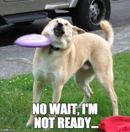 Meme-Funny-dog-fail